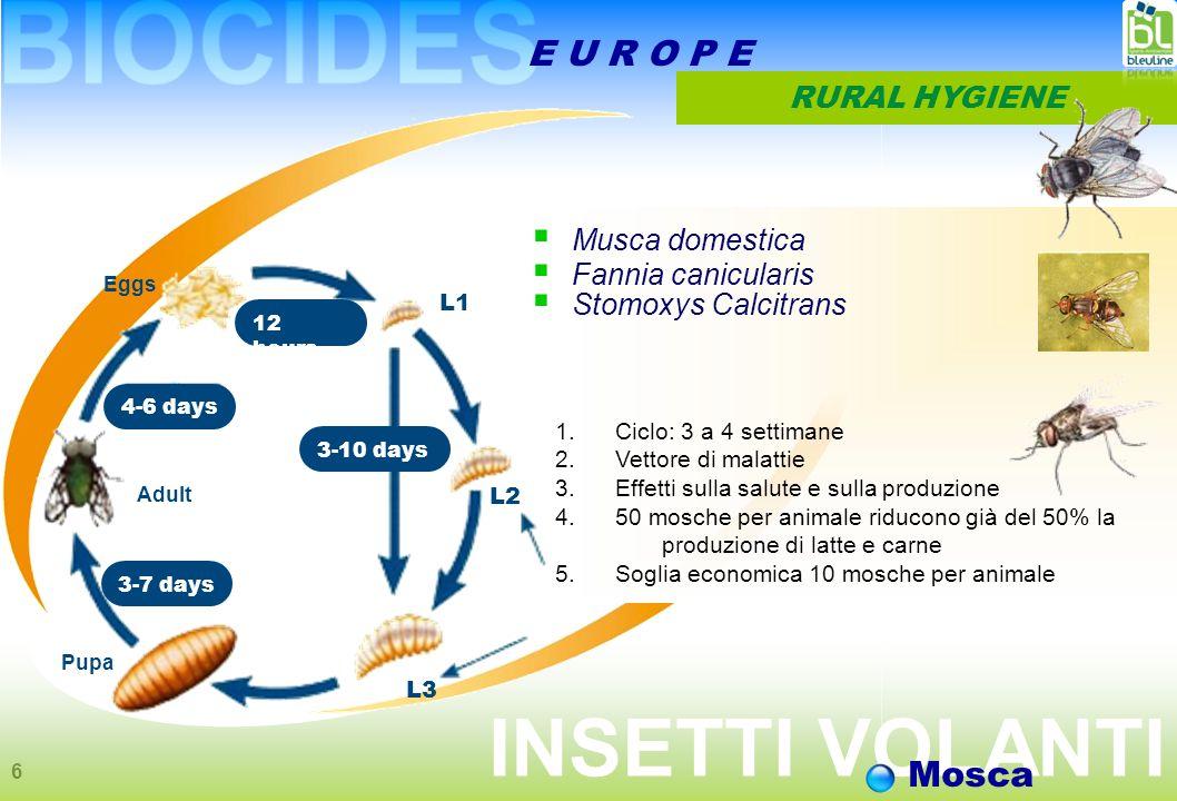 6 E U R O P E RURAL HYGIENE Eggs Adult Pupa 4-6 days 12 hours 3-7 days 3-10 days L1 L2 L3  Musca domestica  Fannia canicularis  Stomoxys Calcitrans 1.