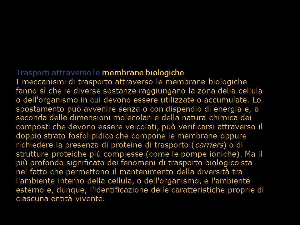 Trasporti attraverso le membrane biologiche I meccanismi di trasporto attraverso le membrane biologiche fanno sì che le diverse sostanze raggiungano l