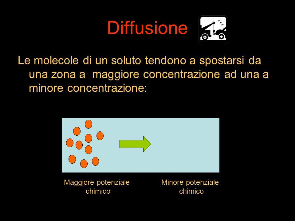 Diffusione Le molecole di un soluto tendono a spostarsi da una zona a maggiore concentrazione ad una a minore concentrazione: Maggiore potenziale chim