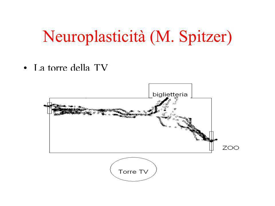 Neuroplasticità (M. Spitzer) La torre della TV