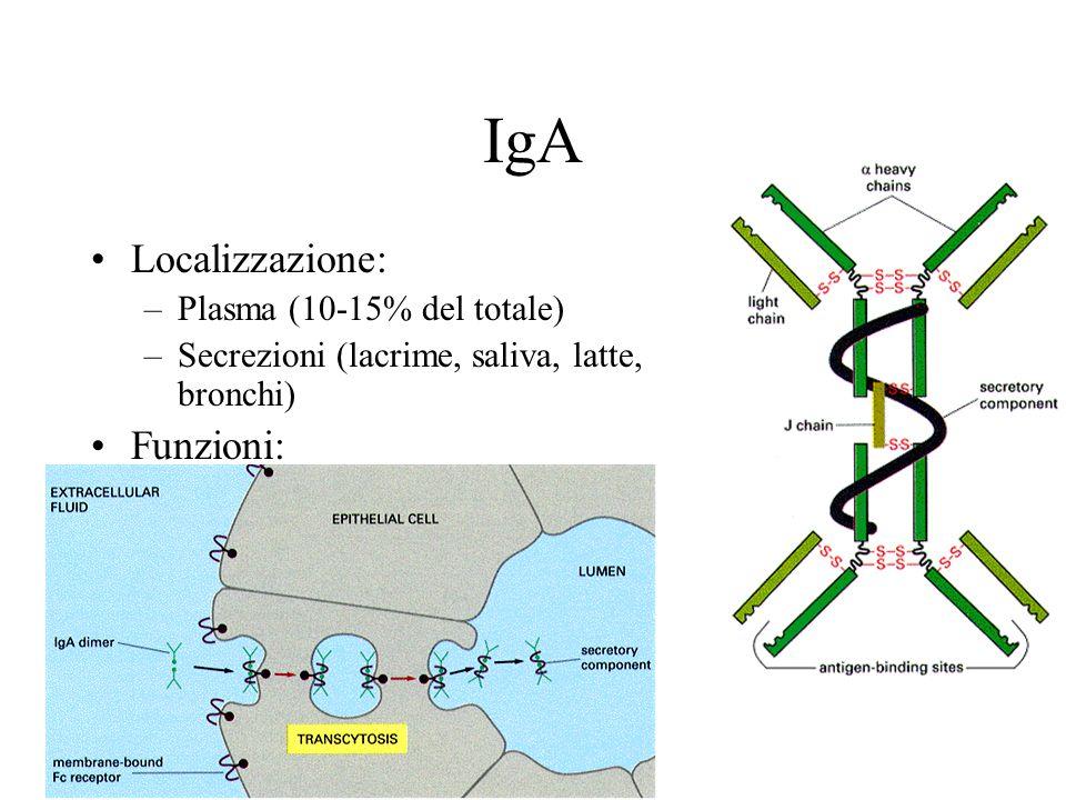 IgA Localizzazione: –Plasma (10-15% del totale) –Secrezioni (lacrime, saliva, latte, bronchi) Funzioni: –Prima linea di difesa contro i patogeni –Attivano complemento Formano dimeri con la componente secretoria