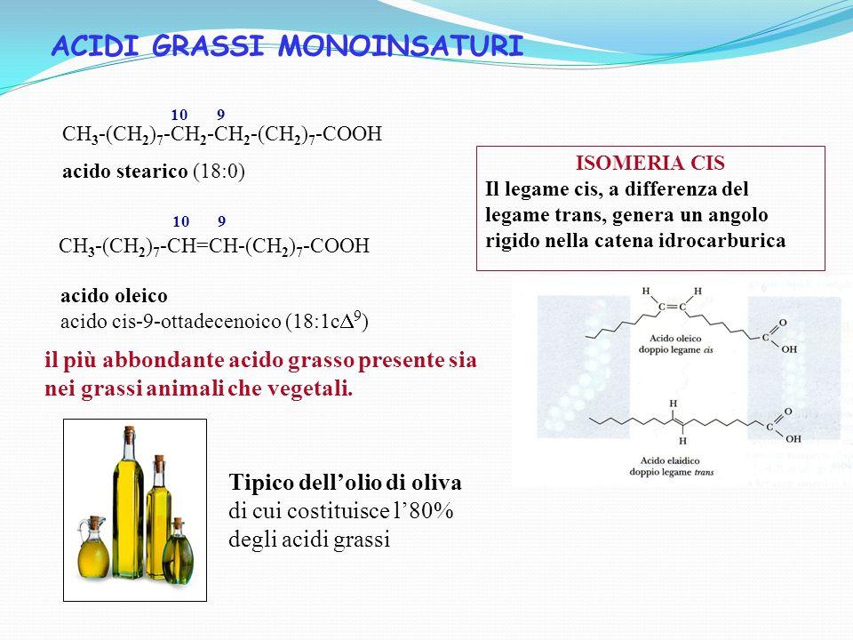 ISOMERIA CIS Il legame cis, a differenza del legame trans, genera un angolo rigido nella catena idrocarburica ACIDI GRASSI MONOINSATURI acido oleico acido cis-9-ottadecenoico (18:1c  9 ) il più abbondante acido grasso presente sia nei grassi animali che vegetali.