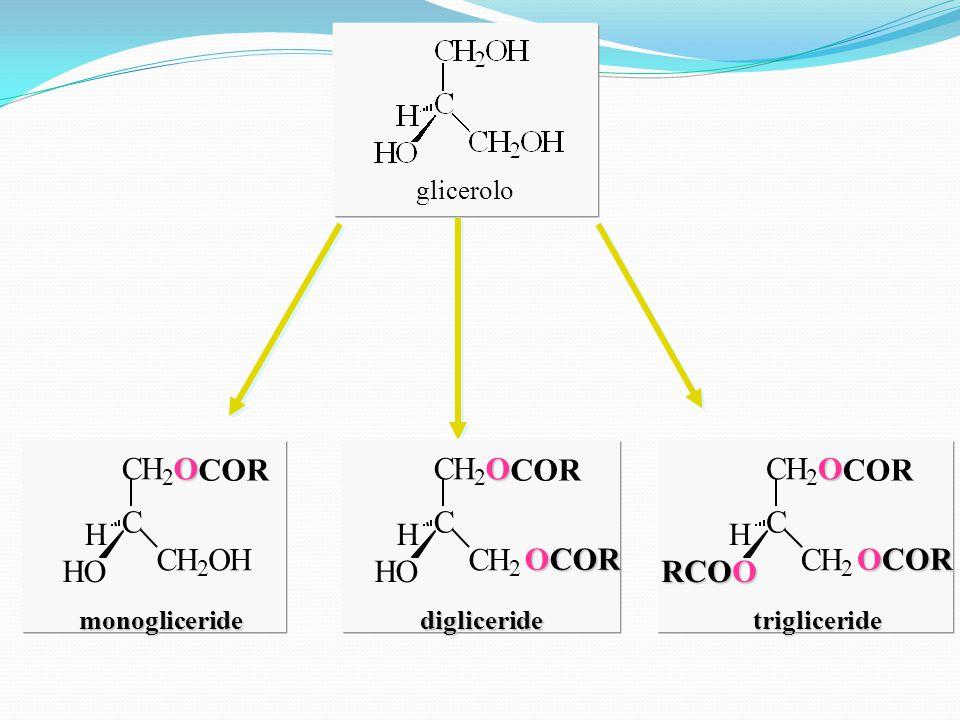 glicerolo C CH 2 O COR CH 2 OH HO H monogliceride C CH 2 O CH 2 OCOR HO H digliceride C CH 2 O COR CH 2 OCOR RCOO H trigliceride