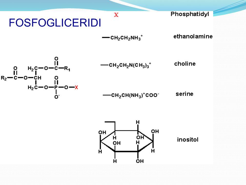 FOSFOGLICERIDI