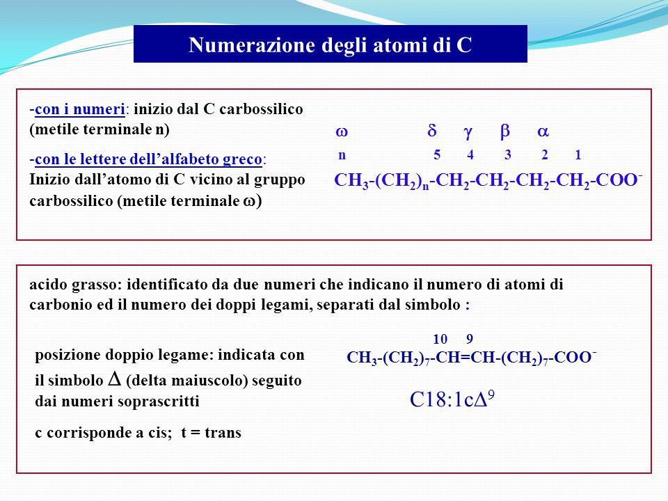 Numerazione degli atomi di C -con i numeri: inizio dal C carbossilico (metile terminale n) -con le lettere dell'alfabeto greco: Inizio dall'atomo di C vicino al gruppo carbossilico (metile terminale  ) CH 3 -(CH 2 ) n -CH 2 -CH 2 -CH 2 -CH 2 -COO - n 5 4 3 2 1      CH 3 -(CH 2 ) 7 -CH=CH-(CH 2 ) 7 -COO - 10 9 posizione doppio legame: indicata con il simbolo  (delta maiuscolo) seguito dai numeri soprascritti c corrisponde a cis; t = trans acido grasso: identificato da due numeri che indicano il numero di atomi di carbonio ed il numero dei doppi legami, separati dal simbolo : C18:1c  9
