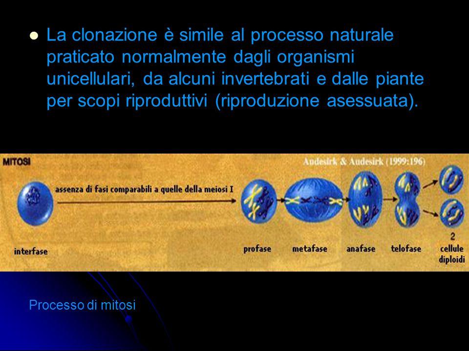 Tecniche di clonazione: 1.1. Embryo-splitting (scissione gemellare) 2.