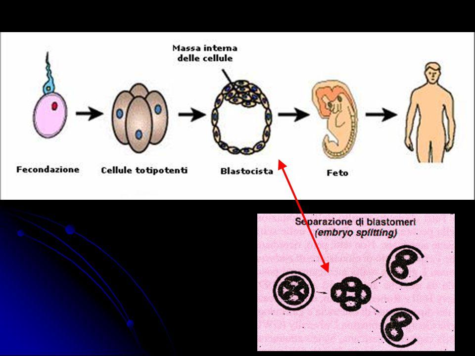 Nuclear transfer   Il trasferimento nucleare è una tecnica che permette di sostituire il genoma di una cellula con quello derivante da un altra.