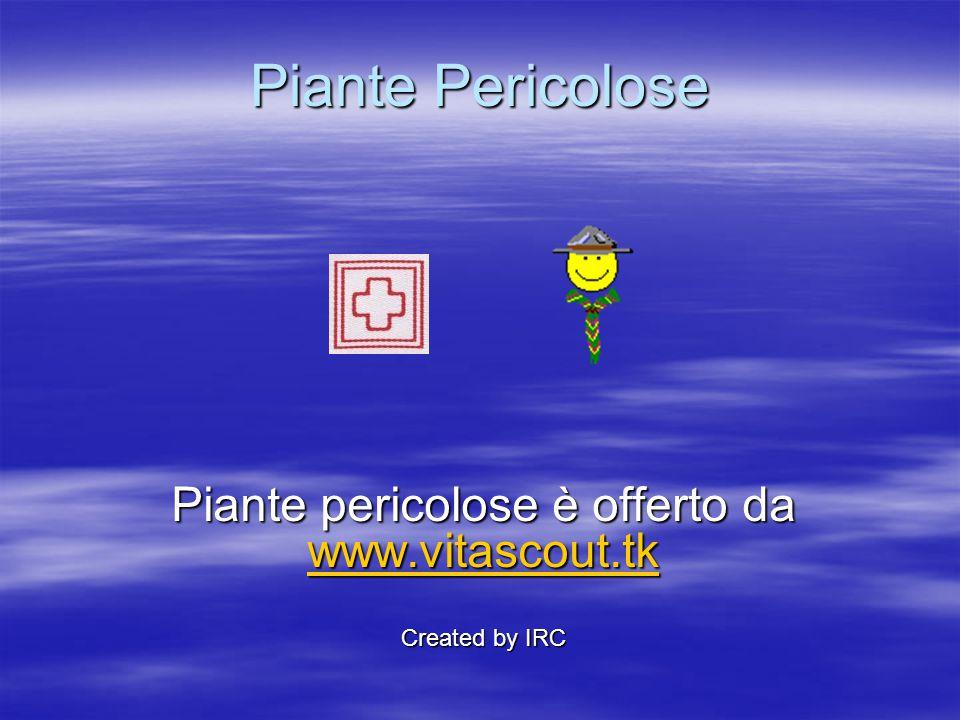 Piante Pericolose Piante pericolose è offerto da www.vitascout.tk www.vitascout.tk Created by IRC