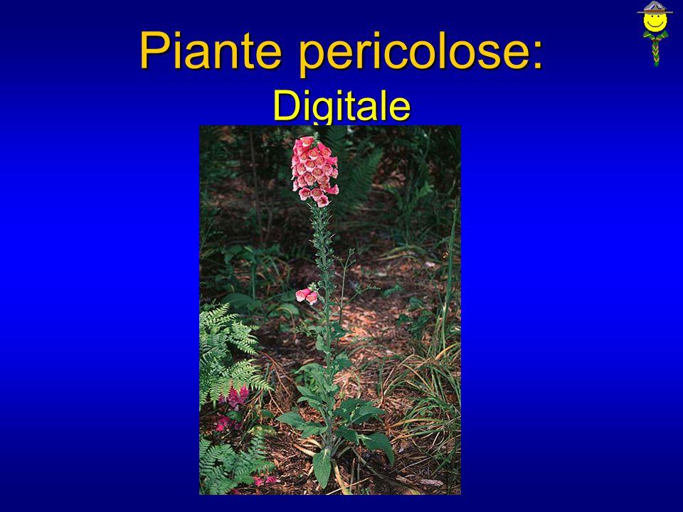 Piante pericolose: Digitale