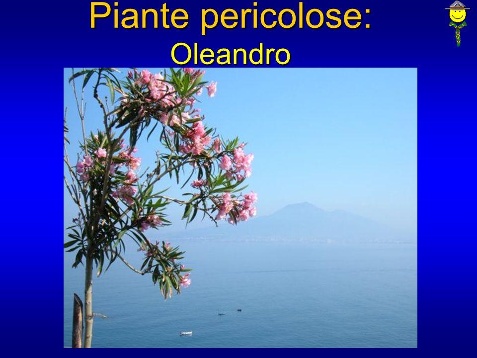 Piante pericolose: Oleandro