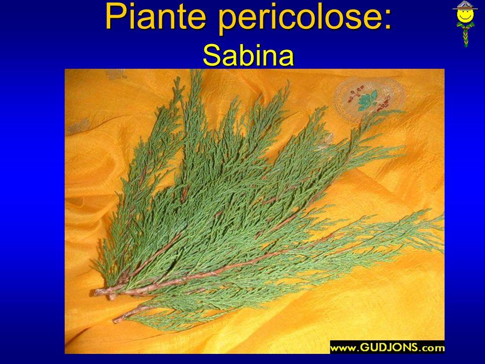 Piante pericolose: Sabina