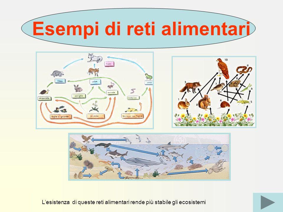 L'esistenza di queste reti alimentari rende più stabile gli ecosistemi Esempi di reti alimentari