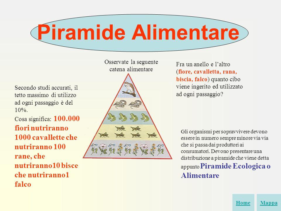 Piramide Alimentare Osservate la seguente catena alimentare Fra un anello e l'altro (fiore, cavalletta, rana, biscia, falco) quanto cibo viene ingerito ed utilizzato ad ogni passaggio.