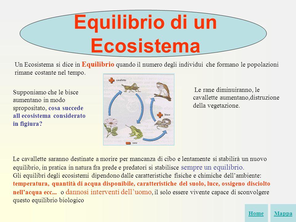 Equilibrio di un Ecosistema Un Ecosistema si dice in Equilibrio quando il numero degli individui che formano le popolazioni rimane costante nel tempo.