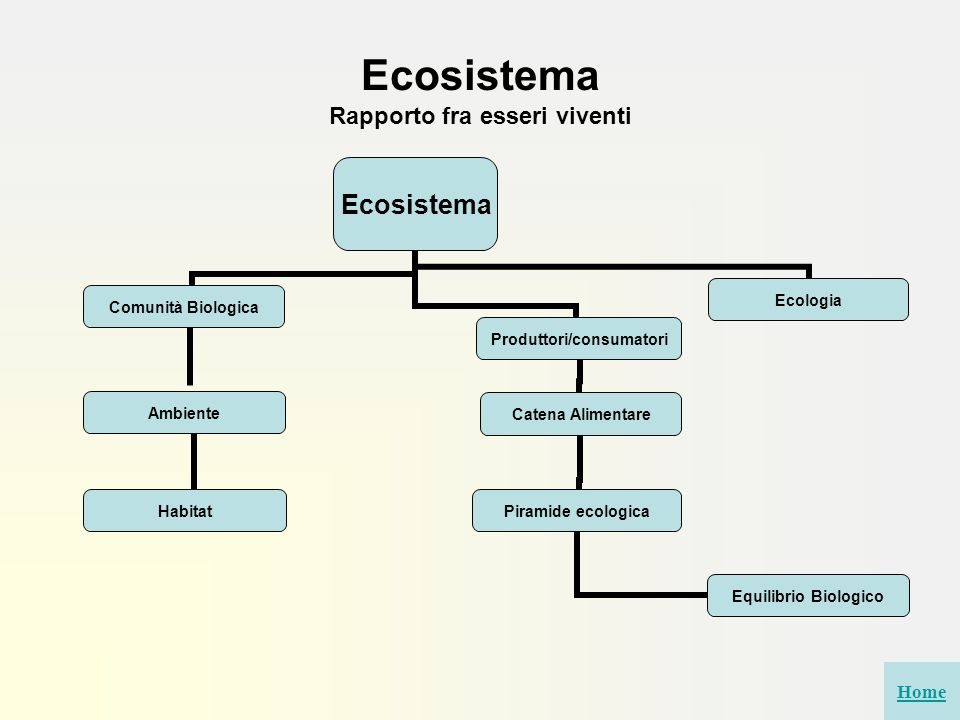 Ecosistema Rapporto fra esseri viventi Ecosistema Comunità Biologica Ambiente Habitat Catena Alimentare Piramide ecologica Equilibrio Biologico EcologiaProduttori/consumatori Home