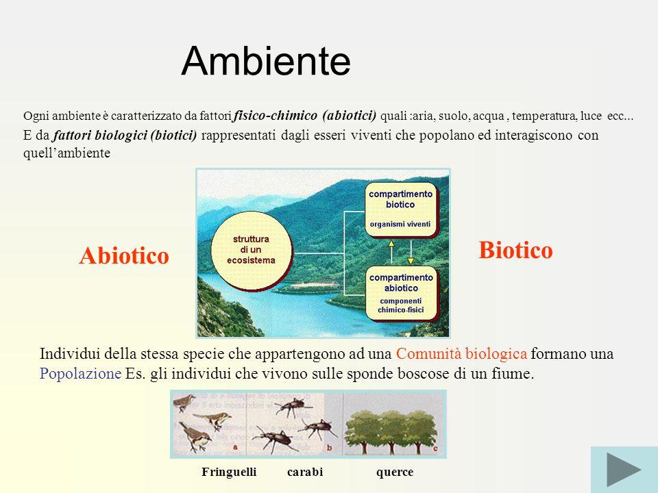 Ogni ambiente è caratterizzato da fattori fisico-chimico (abiotici) quali :aria, suolo, acqua, temperatura, luce ecc...