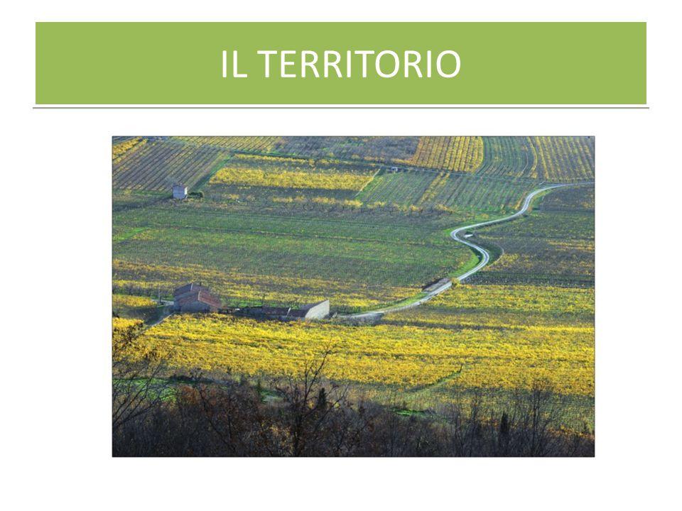 AGRICOLTURA E TURISMO AGRICOLTURA 17.032 ALLOGGIO 784 RISTORAZIONE 4.949 TOUR OPERATOR 246 -1,6% +2,8% +1,5% -2,0% Imprese attive del settore agricolo e turistico nella provincia di Verona.