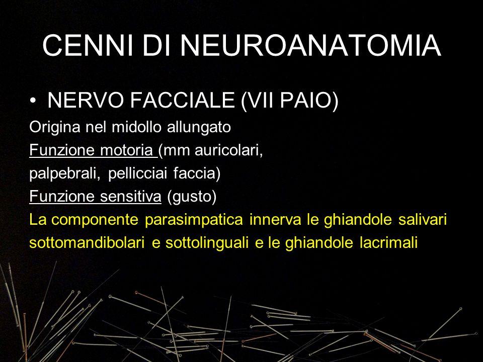 CENNI DI NEUROANATOMIA NERVO FACCIALE (VII PAIO) Origina nel midollo allungato Funzione motoria (mm auricolari, palpebrali, pellicciai faccia) Funzion