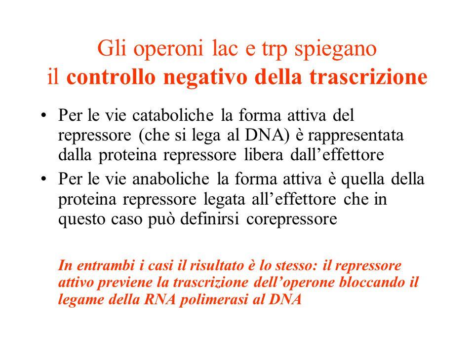 Gli operoni lac e trp spiegano il controllo negativo della trascrizione •Per le vie cataboliche la forma attiva del repressore (che si lega al DNA) è