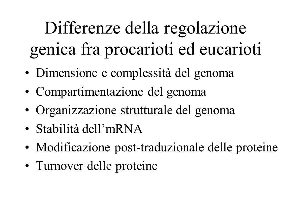 Differenze della regolazione genica fra procarioti ed eucarioti •Dimensione e complessità del genoma •Compartimentazione del genoma •Organizzazione st