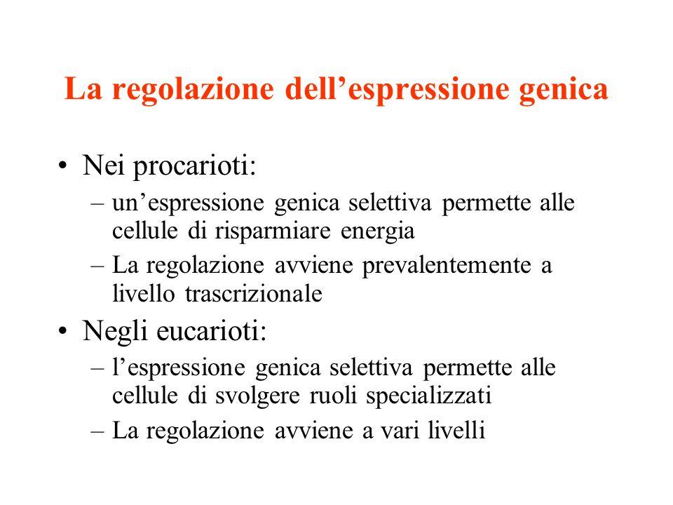 La regolazione dell'espressione genica •Nei procarioti: –un'espressione genica selettiva permette alle cellule di risparmiare energia –La regolazione