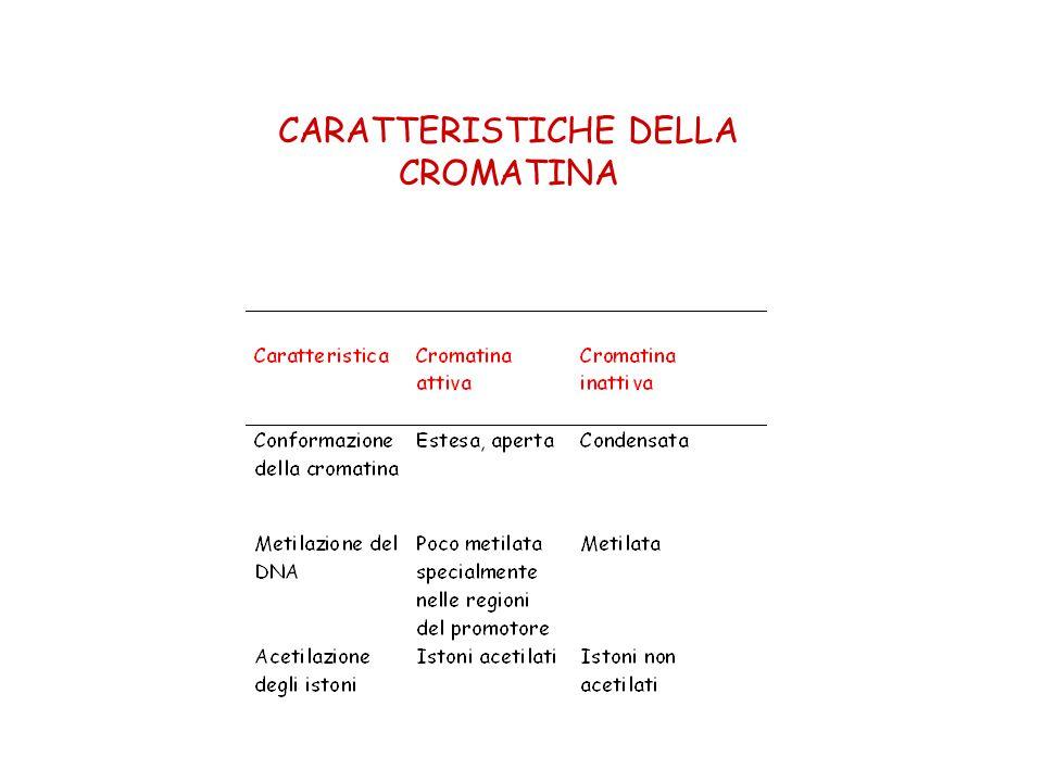CARATTERISTICHE DELLA CROMATINA