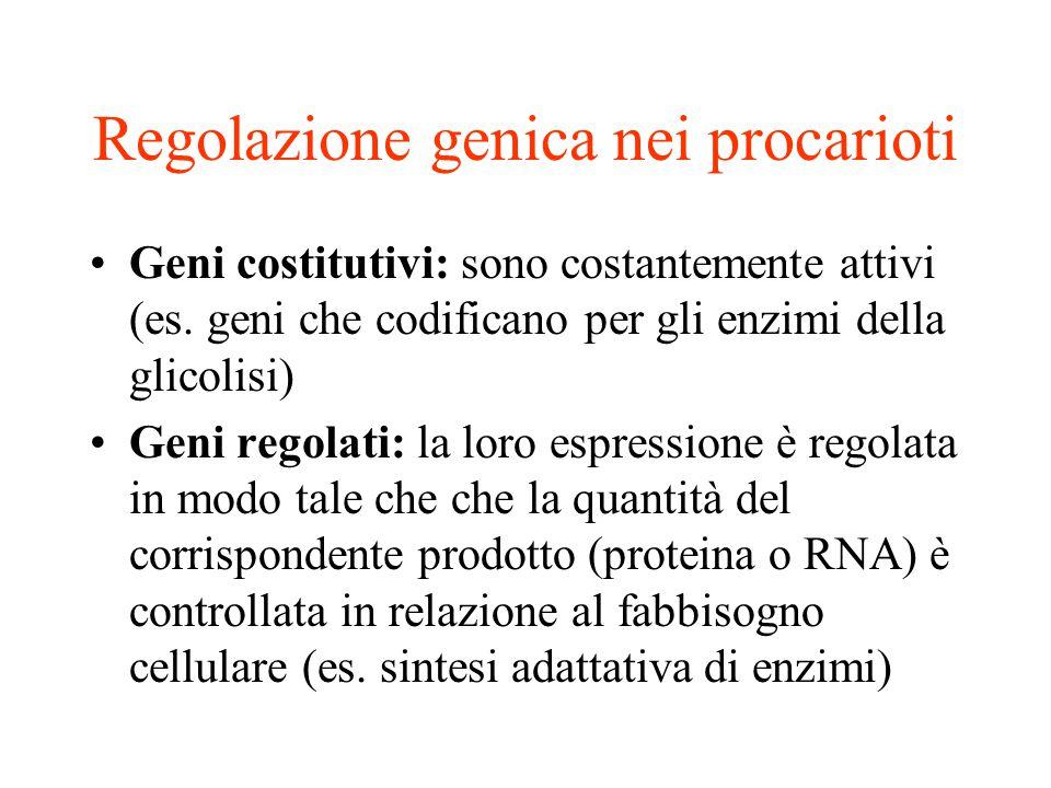 Regolazione genica nei procarioti •Geni costitutivi: sono costantemente attivi (es. geni che codificano per gli enzimi della glicolisi) •Geni regolati
