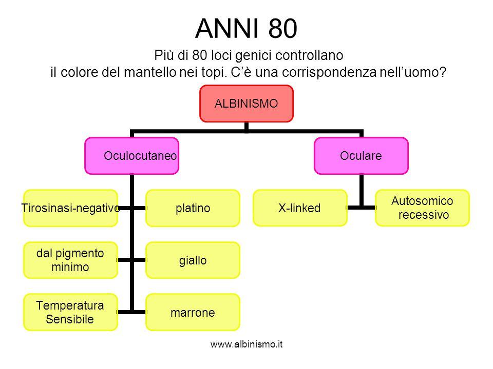 www.albinismo.it ANNI 80 Più di 80 loci genici controllano il colore del mantello nei topi. C'è una corrispondenza nell'uomo? ALBINISMO Oculocutaneo T