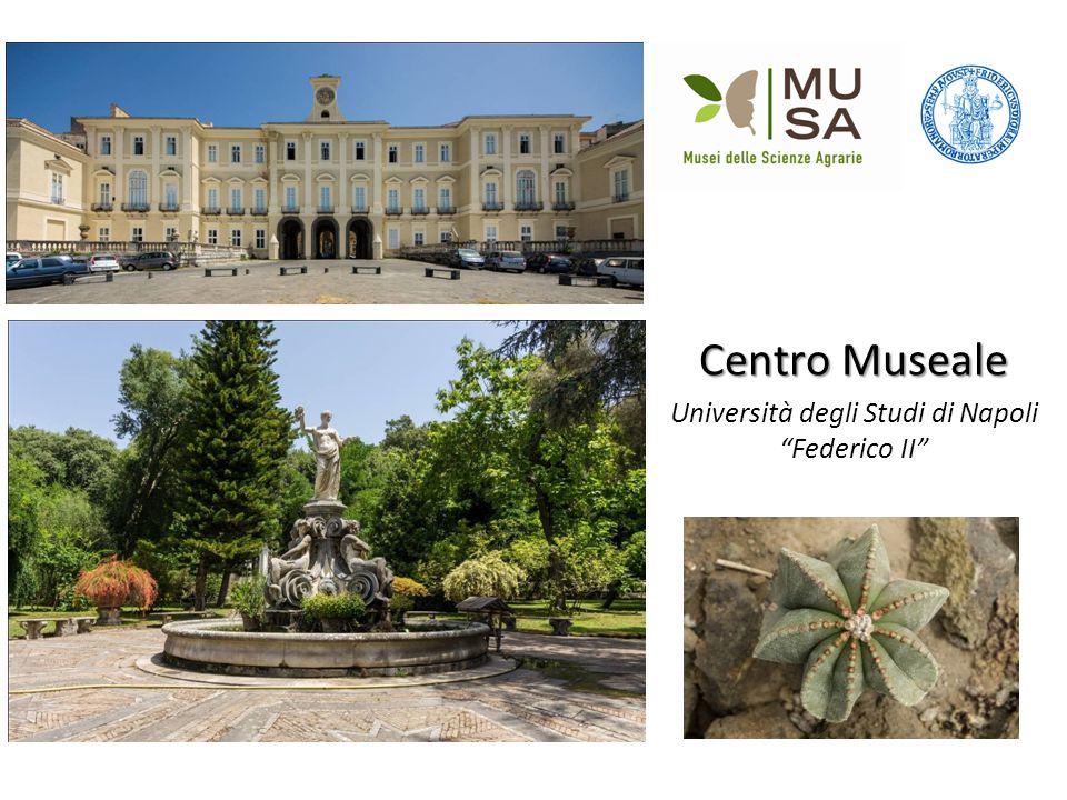 """Centro Museale Università degli Studi di Napoli """"Federico II"""""""