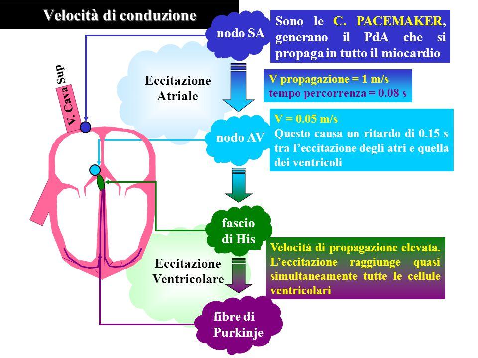 Eccitazione Ventricolare Eccitazione Atriale Velocità di conduzione nodo SA nodo AV fascio di His V. Cava Sup fibre di Purkinje Sono le C. PACEMAKER,