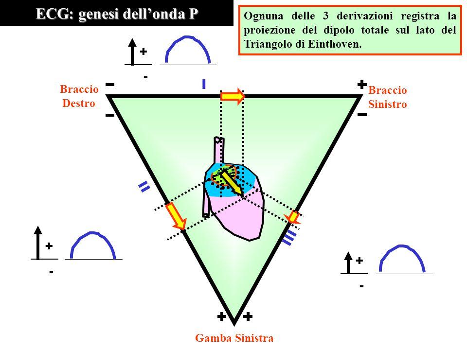 ECG: genesi dell'onda P Ognuna delle 3 derivazioni registra la proiezione del dipolo totale sul lato del Triangolo di Einthoven. III II I Braccio Dest