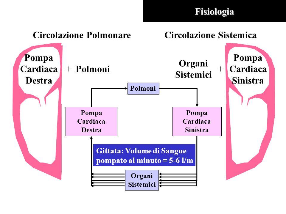 Circolazione PolmonareFisiologia Pompa Cardiaca Destra +Polmoni Circolazione Sistemica Pompa Cardiaca Sinistra + Organi Sistemici Pompa Cardiaca Destra Pompa Cardiaca Sinistra Polmoni Organi Sistemici Gittata: Volume di Sangue pompato al minuto = 5-6 l/m