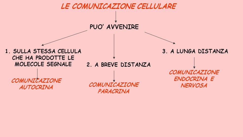 LE COMUNICAZIONE CELLULARE PUO' AVVENIRE 1. SULLA STESSA CELLULA CHE HA PRODOTTE LE MOLECOLE SEGNALE COMUNICAZIONE AUTOCRINA 2. A BREVE DISTANZA COMUN