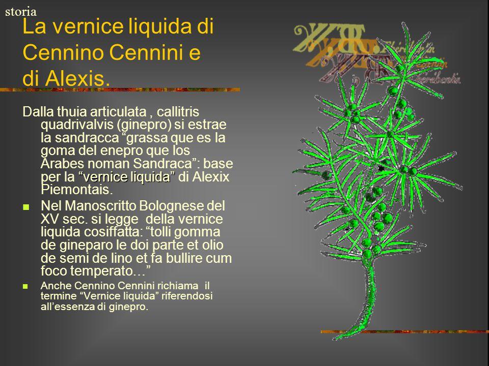 """La vernice liquida di Cennino Cennini e di Alexis. """"vernice liquida"""" Dalla thuia articulata, callitris quadrivalvis (ginepro) si estrae la sandracca """""""