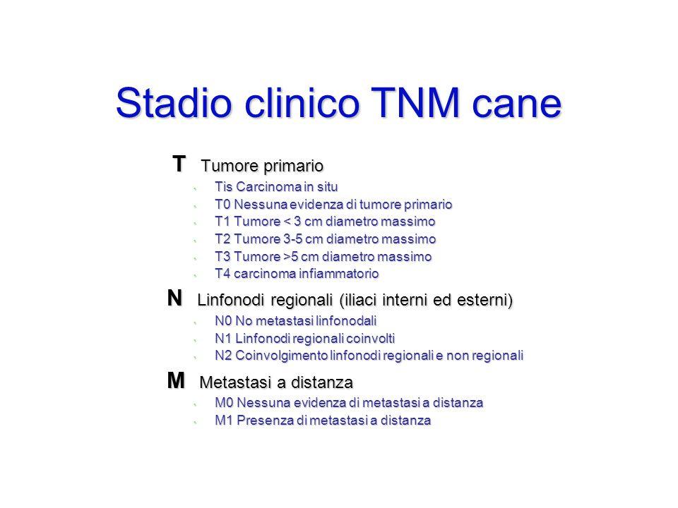 Stadio clinico TNM cane T Tumore primario T Tumore primario Tis Carcinoma in situ Tis Carcinoma in situ T0 Nessuna evidenza di tumore primario T0 Ness