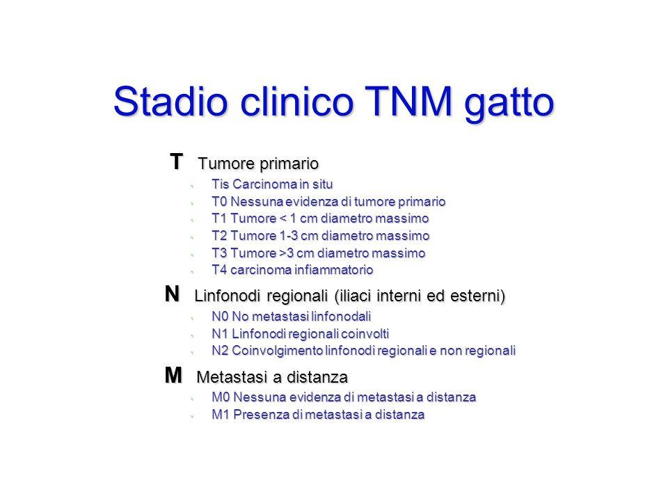 Stadio clinico TNM gatto T Tumore primario T Tumore primario Tis Carcinoma in situ Tis Carcinoma in situ T0 Nessuna evidenza di tumore primario T0 Nes