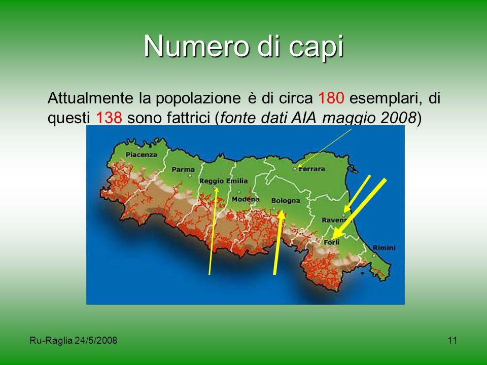 Ru-Raglia 24/5/200811 Numero di capi Attualmente la popolazione è di circa 180 esemplari, di questi 138 sono fattrici (fonte dati AIA maggio 2008)