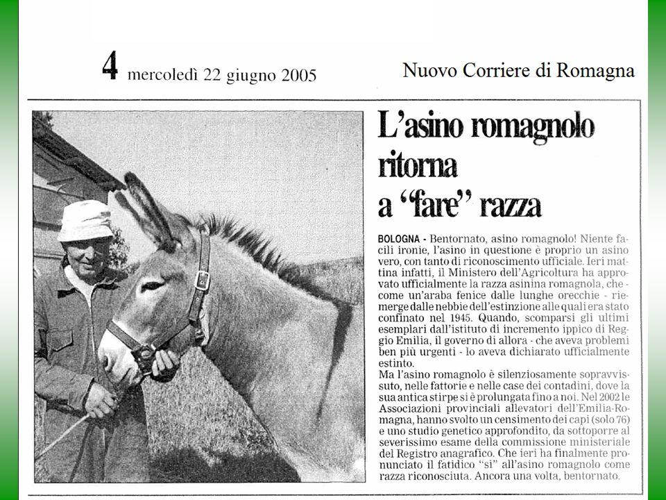Ru-Raglia 24/5/200825