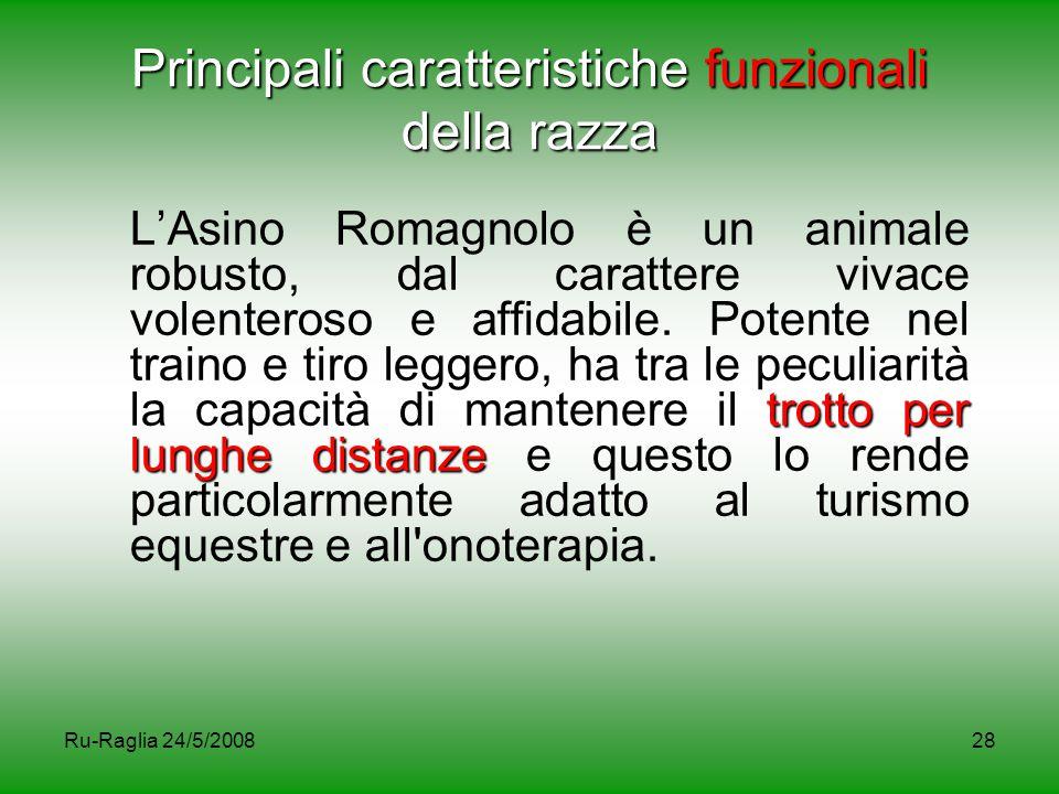 Ru-Raglia 24/5/200828 Principali caratteristiche funzionali della razza trotto per lunghe distanze L'Asino Romagnolo è un animale robusto, dal caratte