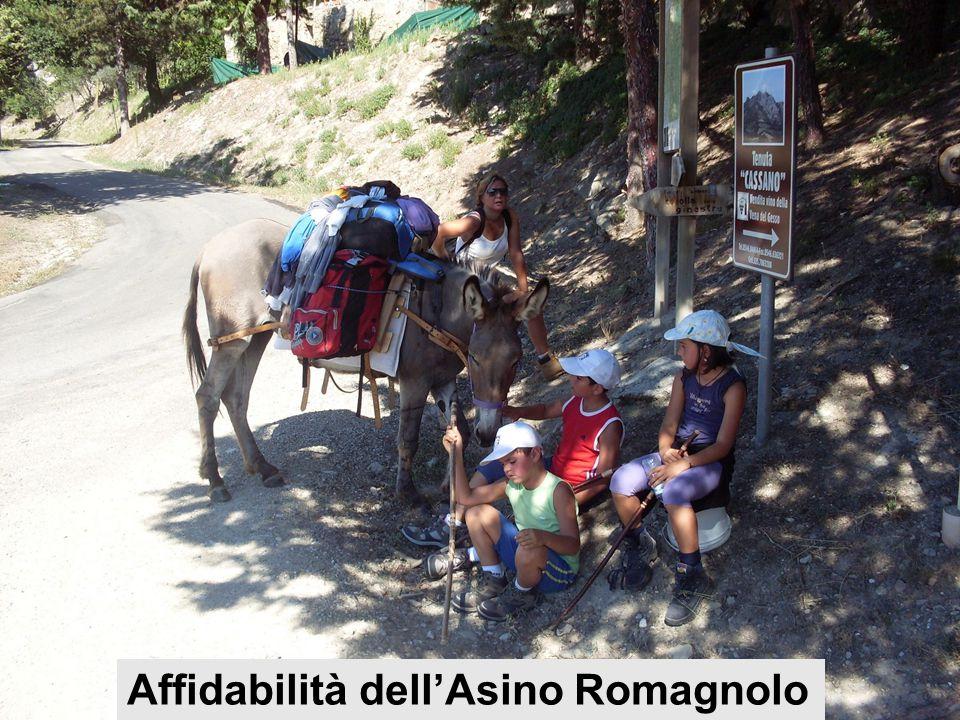 Ru-Raglia 24/5/200830 Affidabilità dell'Asino Romagnolo
