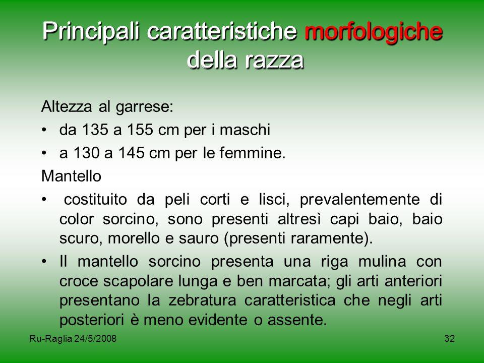 Ru-Raglia 24/5/200832 Principali caratteristiche morfologiche della razza Altezza al garrese: da 135 a 155 cm per i maschi a 130 a 145 cm per le femmi