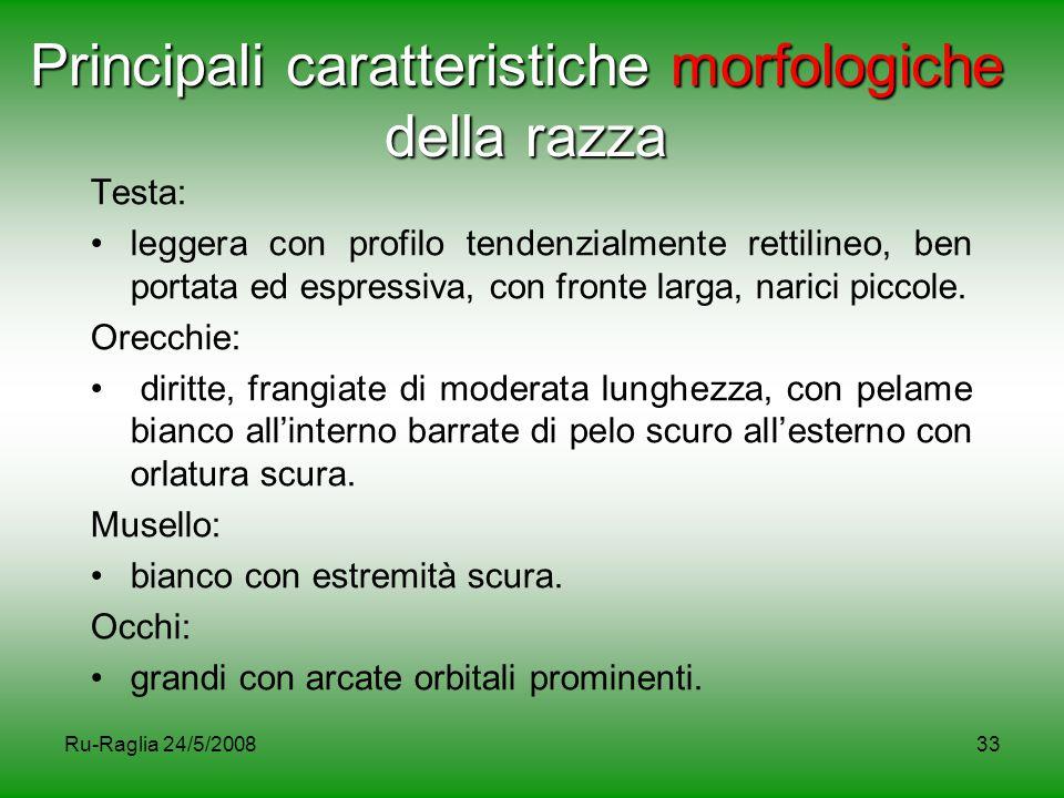 Ru-Raglia 24/5/200833 Principali caratteristiche morfologiche della razza Testa: leggera con profilo tendenzialmente rettilineo, ben portata ed espres