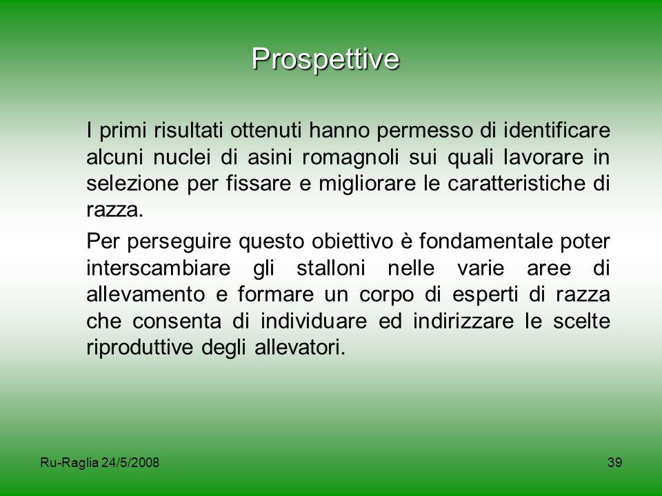 Ru-Raglia 24/5/200839 Prospettive I primi risultati ottenuti hanno permesso di identificare alcuni nuclei di asini romagnoli sui quali lavorare in sel