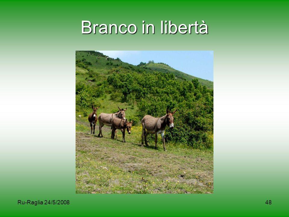 Ru-Raglia 24/5/200848 Branco in libertà