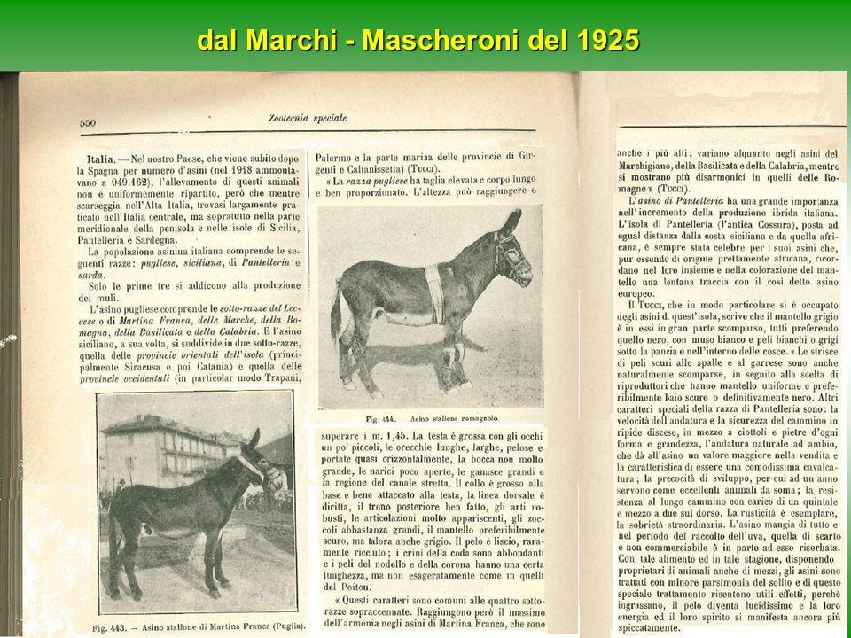 Ru-Raglia 24/5/200816 Iter per l'iscrizione al Registro Anagrafico razze popolazioni equine a limitata diffusione 1/9 Il processo di inserimento della razza nel registro anagrafico nazionale, è stato alquanto lungo e complesso (la prima riunione è del 2003).