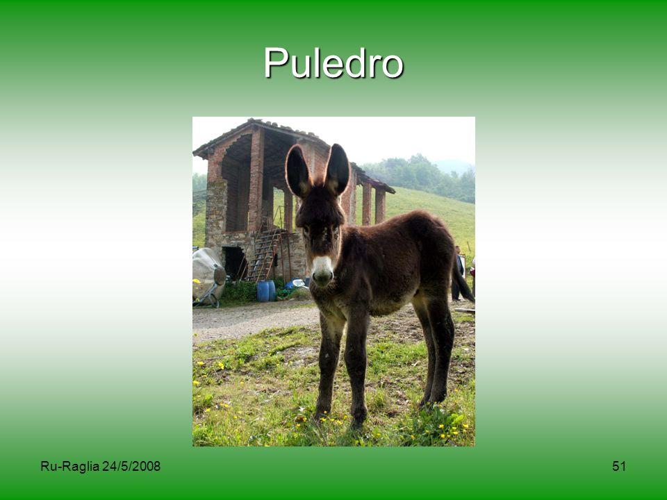Ru-Raglia 24/5/200851 Puledro