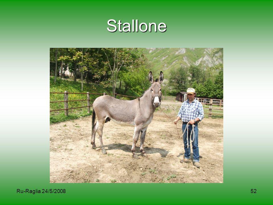 Ru-Raglia 24/5/200852 Stallone