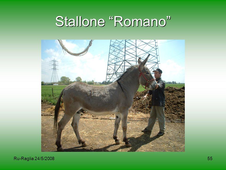 """Ru-Raglia 24/5/200855 Stallone """"Romano"""""""