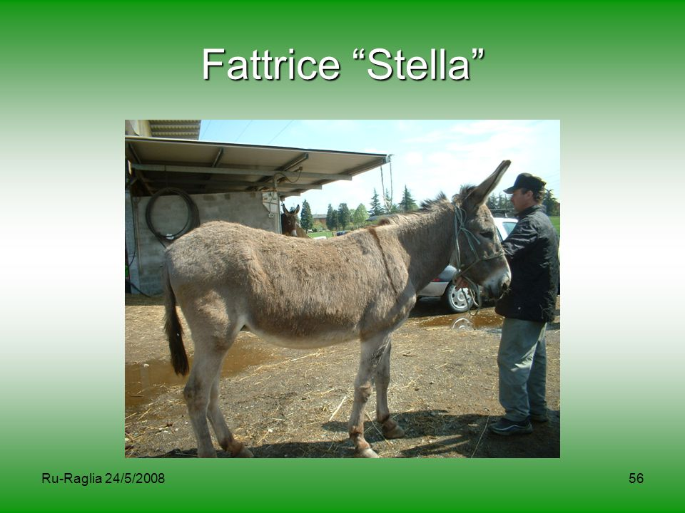 """Ru-Raglia 24/5/200856 Fattrice """"Stella"""""""