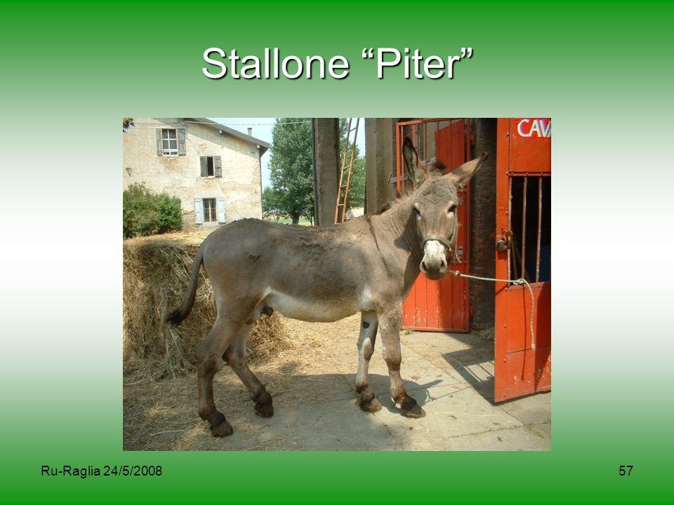 """Ru-Raglia 24/5/200857 Stallone """"Piter"""""""